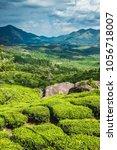 tea plantations in kerala | Shutterstock . vector #1056718007