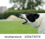barking dog on the green blurred background - stock photo