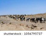 flock of goats near arrecife | Shutterstock . vector #1056795737