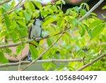 the red whiskered bulbul or... | Shutterstock . vector #1056840497