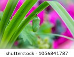 Small photo of Chrysalis on Green Plant
