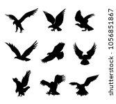 eagle falcon bird hawk animal... | Shutterstock .eps vector #1056851867