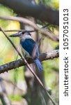 bird  collared kingfisher ... | Shutterstock . vector #1057051013