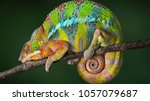 colorful driskel veiled color... | Shutterstock . vector #1057079687