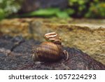 golden rings on snail sliding... | Shutterstock . vector #1057224293