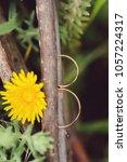two golden rings in tree... | Shutterstock . vector #1057224317
