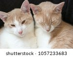 Small photo of Snuggling prance kittens