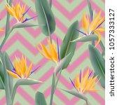 bird of paradise tropical... | Shutterstock .eps vector #1057333127