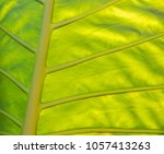 banana leaf close up | Shutterstock . vector #1057413263