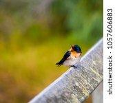 a dainty delightful  little... | Shutterstock . vector #1057606883