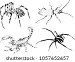 vector drawings sketches... | Shutterstock .eps vector #1057652657