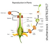 education chart of biology for... | Shutterstock .eps vector #1057812917