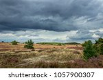 L Neburg Heath Is A Large Area...