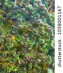 freshwater aquatic plants...   Shutterstock . vector #1058001167