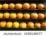 Pumpkins In A Shelf