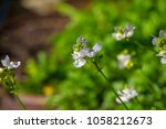 dainty small two lipped blooms... | Shutterstock . vector #1058212673