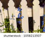 dainty  blue flower spires  of  ... | Shutterstock . vector #1058213507