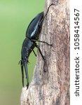 giraffe stag beetle  ...   Shutterstock . vector #1058414567