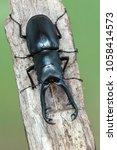 giraffe stag beetle  ...   Shutterstock . vector #1058414573
