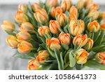 Tulips Of Orange Color. Big...