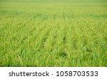 a paddy feild | Shutterstock . vector #1058703533