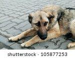 Homeless Dog On The Street