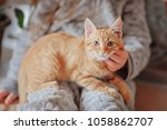 red haired kitten in the hands... | Shutterstock . vector #1058862707