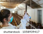 veterinarian holding a chick in ... | Shutterstock . vector #1058939417