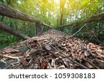 close up walk way in forest  ...   Shutterstock . vector #1059308183