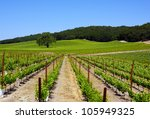 Paso Robles Winery - stock photo