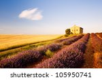 chapel with lavender and grain fields, Plateau de Valensole, Provence, France - stock photo