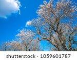 beautiful landscape around... | Shutterstock . vector #1059601787
