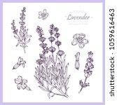 hand drawn botanical... | Shutterstock .eps vector #1059616463