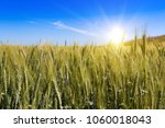 Wheat Field With Blue Sky With...
