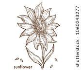 ripe sunflower with big blossom ... | Shutterstock .eps vector #1060243277
