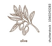ripe olives on branch with... | Shutterstock .eps vector #1060243283