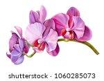 Tropical Plants  Orchid   Flor...
