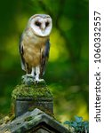 magic bird barn owl  tyto alba  ... | Shutterstock . vector #1060332557