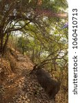 Small photo of Nature Trails through the forest with Flora and Fauna in the warmth of the Indian summer