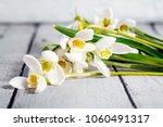 snowdrop flowers isolated on... | Shutterstock . vector #1060491317