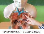young female teacher in biology ... | Shutterstock . vector #1060495523