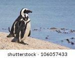 pair of african penguins ... | Shutterstock . vector #106057433