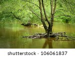 Flooded Woodland In Wales  Uk...