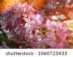 beautiful spring flowers...   Shutterstock . vector #1060723433
