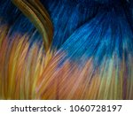 siamese fighting fish betta... | Shutterstock . vector #1060728197