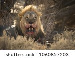 A Horizontal Image Of A Wild...
