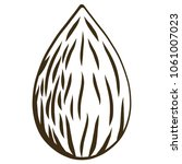 raw almond nut by hand drawing... | Shutterstock .eps vector #1061007023