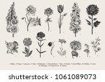 big set flowers. victorian... | Shutterstock .eps vector #1061089073