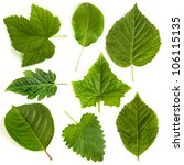 Green leaf collection on white background - stock photo