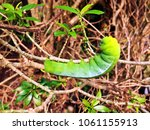Small photo of Little worm , Glass worm